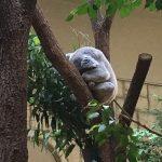 東山動物園に行ってきました♪